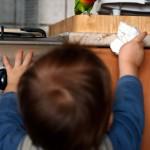 Agapornis_fischeri_-toddler-6a